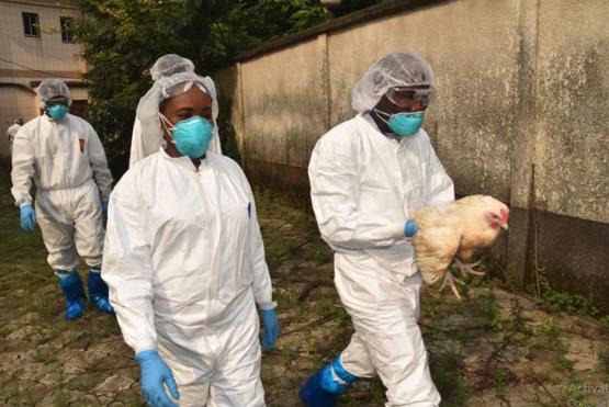 La FAO - ECTAD appuie le Cameroun dans la formation des agents vétérinaires de base sur les techniques de gestion des épizooties.