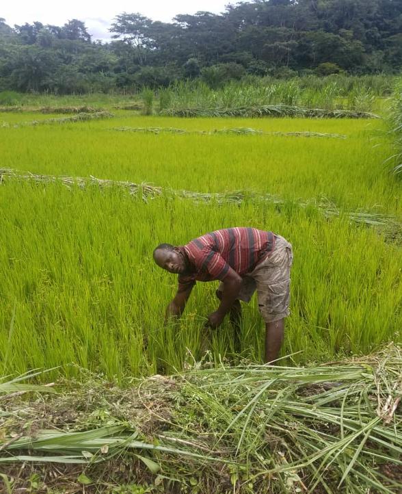 Coopération Cameroun-FIDA : un nouvel élan dans le développement des filières riz et oignon